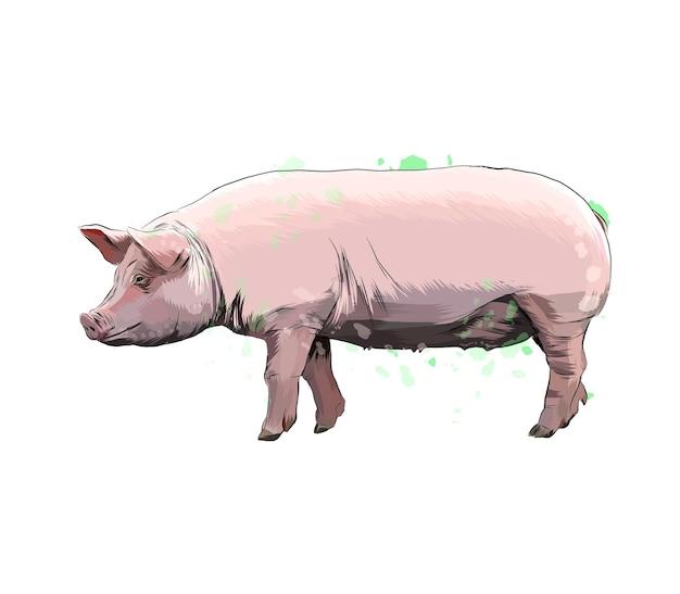 Świnia z odrobiną akwareli, kolorowy rysunek, realistyczny.