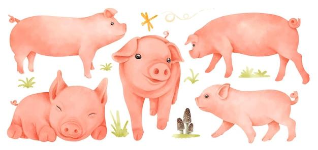 Świnie ilustracje w stylu akwareli