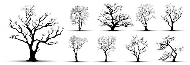 Sylwetka drzewa na białym tle.