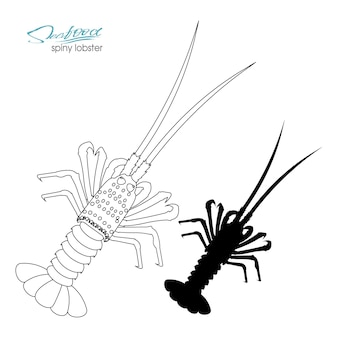 Sylwetka kolczasty homar liniowa sylwetka kolczasty homar