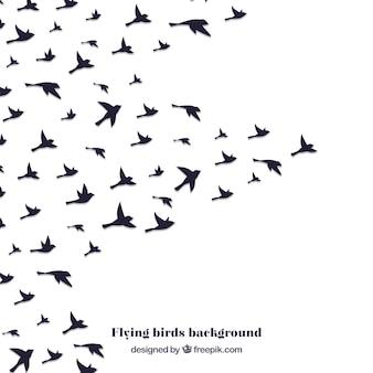 Sylwetka latający ptak tło