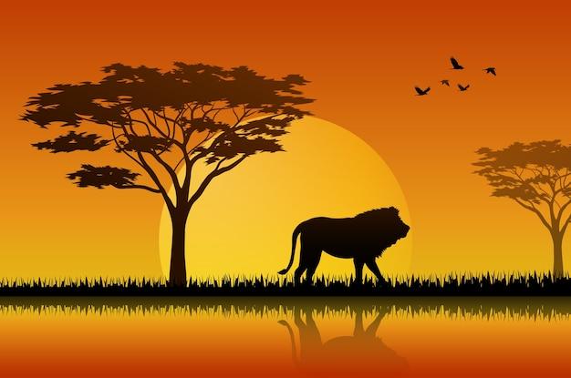 Sylwetka lew przy jeziorem w savanah
