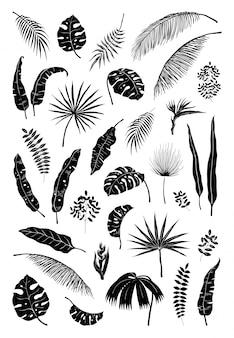 Sylwetka liści palmowych. czarne rośliny dżungli, letnie liście izolowane elementy egzotyczne gałęzie kwiatowe. zestaw sylwetki roślin monstera