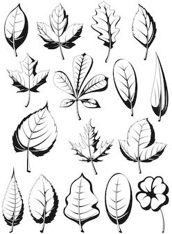 Sylwetka roślin pozostawia ilustracja liść na białym tle zestaw konspektu