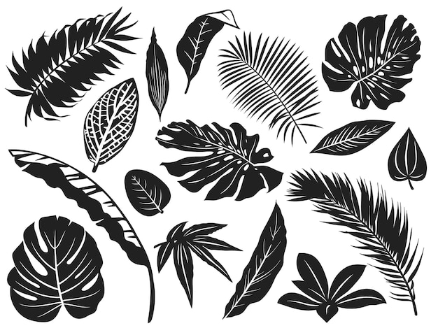 Sylwetka tropikalnych liści. liść palmy, drzewa kokosowe i liście monstera czarne sylwetki zestaw ilustracji.