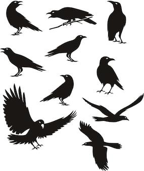 Sylwetka wrony