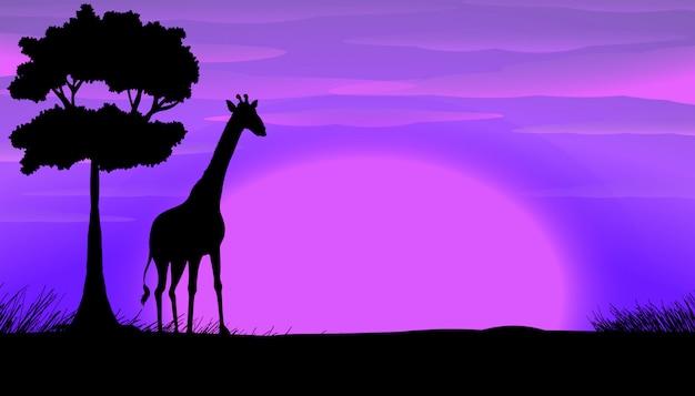 Sylwetka żyrafa w safari