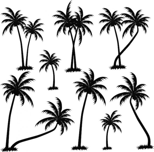 Sylwetki drzew palmowych
