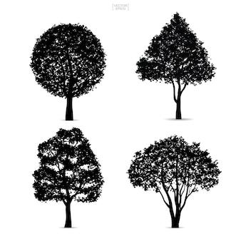 Sylwetki drzewa na białym tle.