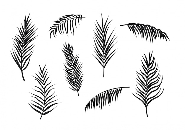 Sylwetki liści palmowych na białym tle