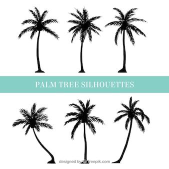 Sylwetki palmy