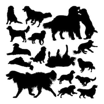 Sylwetki psów golden retriever