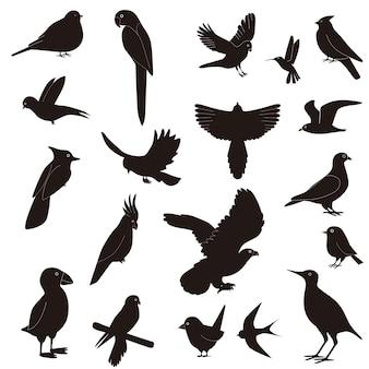 Sylwetki ptaków w locie, na białym tle