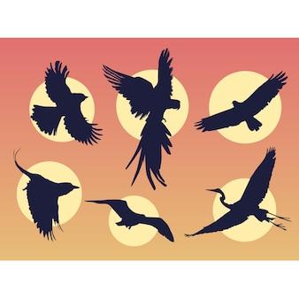Sylwetki ptaków