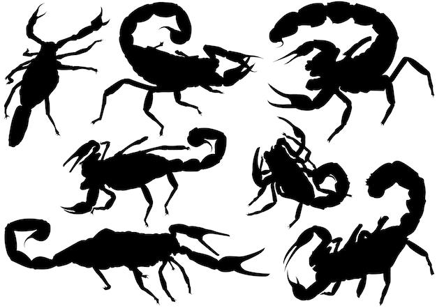 Sylwetki skorpiona