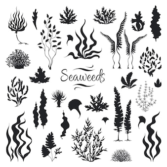 Sylwetki wodorostów. podwodna rafa koralowa, ręcznie rysowane wodorosty morskie, morskie chwasty na zewnątrz oceanu