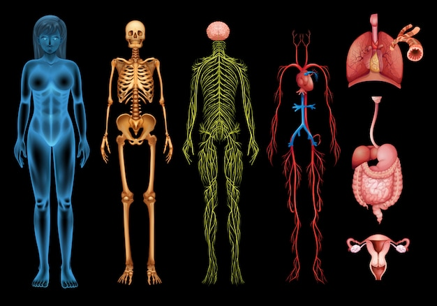 Systemy ludzkiego ciała