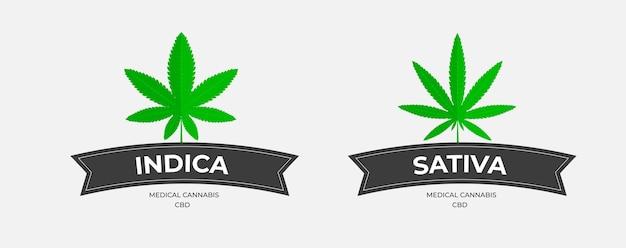 Szablon logo graficznego z trawą, organicznym thc i sbd. emblematy wektorowe z liśćmi konopi, z ciemnymi wstążkami na białym tle. projekt plakietek medycznej marihuany indica i sativa.