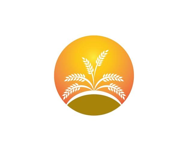 Szablon logo ryżu pszenicy