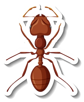 Szablon naklejki z bliska czerwonej mrówki na białym tle
