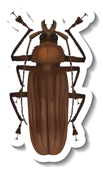 Szablon naklejki z widokiem z góry na izolowanego chrząszcza chrabąszcza