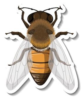 Szablon naklejki z widokiem z góry odizolowanej pszczoły miodnej