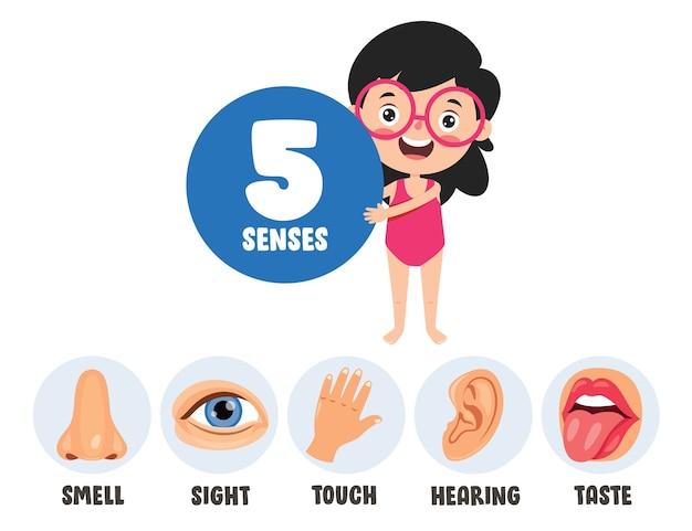 Szablon pięciu zmysłów z ludzkimi narządami