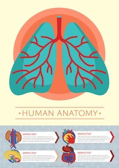 Szablon plakat medyczny anatomii człowieka z narządów wewnętrznych