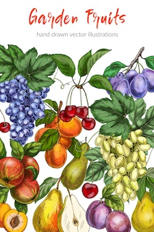 Szablon plakat owoce