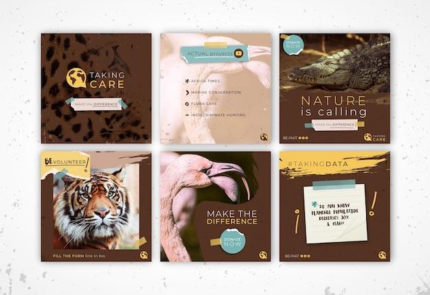 Szablon postów na instagramie dzikiej przyrody