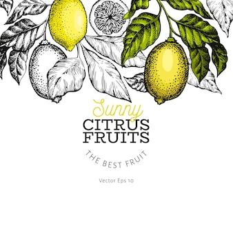 Szablon projektu drzewa cytrynowego. ręcznie rysowane ilustracji wektorowych owoców. grawerowany styl
