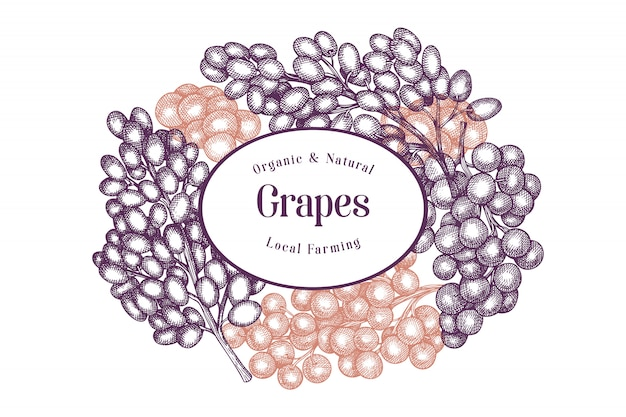 Szablon projektu winogron. ręcznie rysowane ilustracji wektorowych jagód winogron.