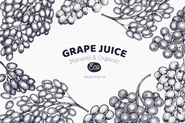 Szablon projektu winogron. ręcznie rysowane winogron jagodowych ilustracja. grawerowany styl retro botaniczny.