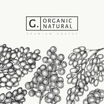 Szablon projektu winogron. ręcznie rysowane winogron jagodowych ilustracja. grawerowany styl retro transparent botaniczny.
