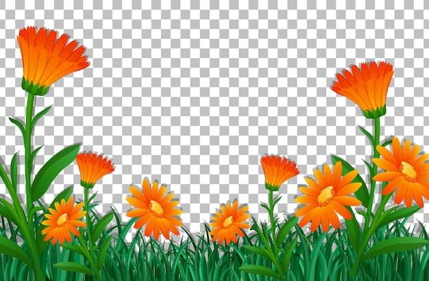 Szablon ramki pola pomarańczowy kwiat na przezroczystym tle