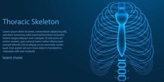 Szablon szkielet klatki piersiowej