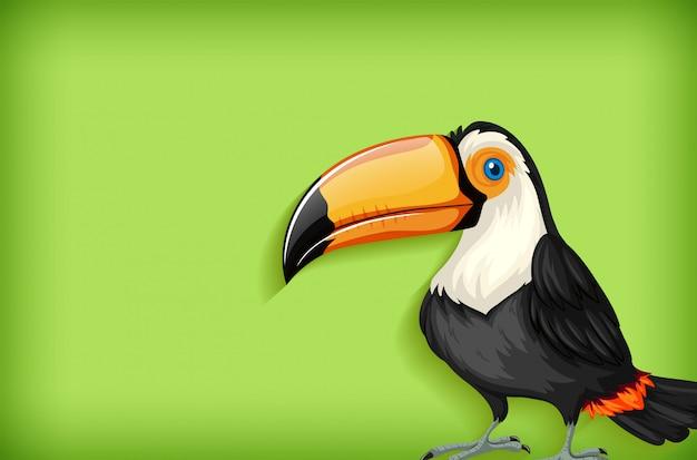 Szablon tło z jednolitego koloru i ptak tukan