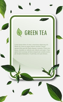 Szablon transparent zielonej herbaty. ilustracja wektorowa zielonej herbaty.