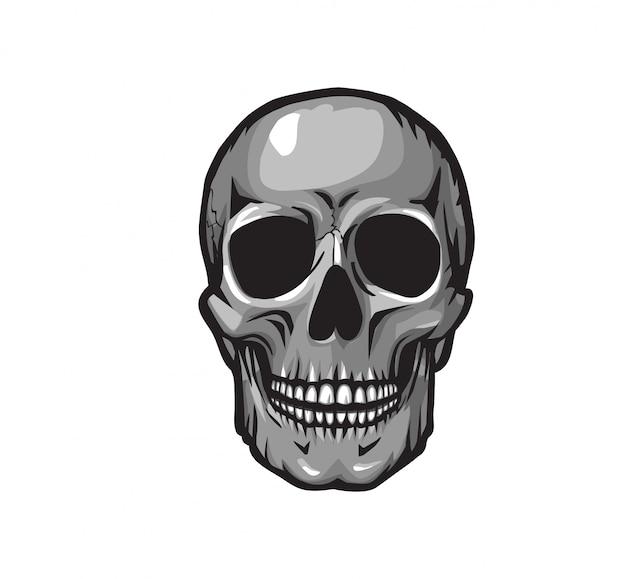 Szara ludzka czaszka
