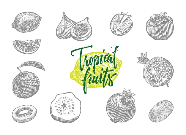 Szare na białym tle wygrawerowane różne owoce tropikalne ustawione w stylu rysowania