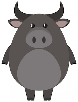 Szary bizon na białym tle