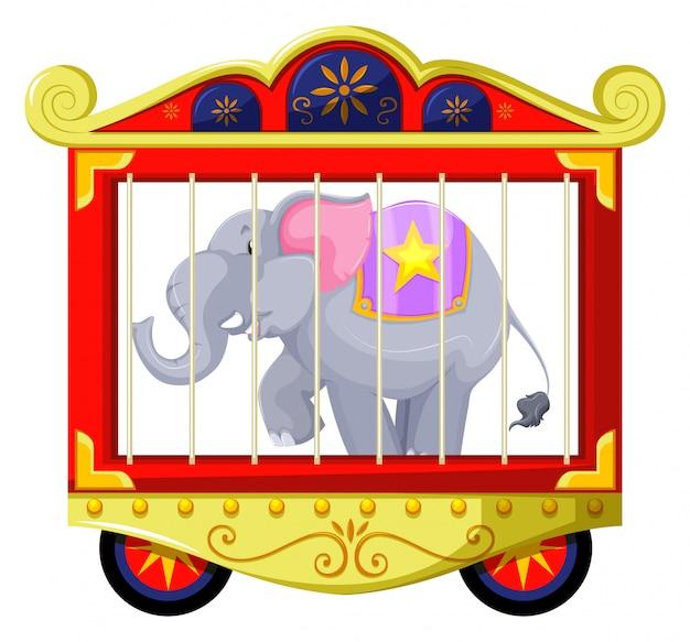 Szary słoń w klatce cyrkowej