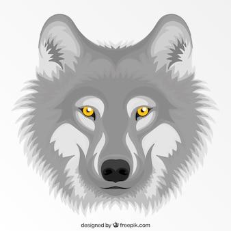 Szary wilk z żółtym tle oczu