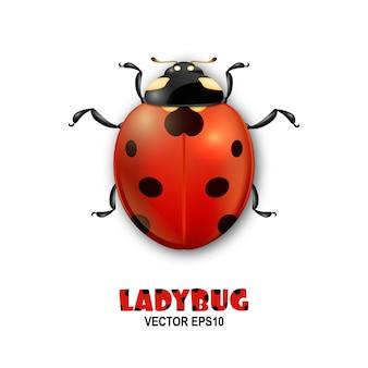 Szczegół realistyczne biedronka owad ikona na białym tle