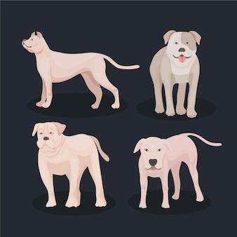 Szczegółowa kolekcja psów pitbull