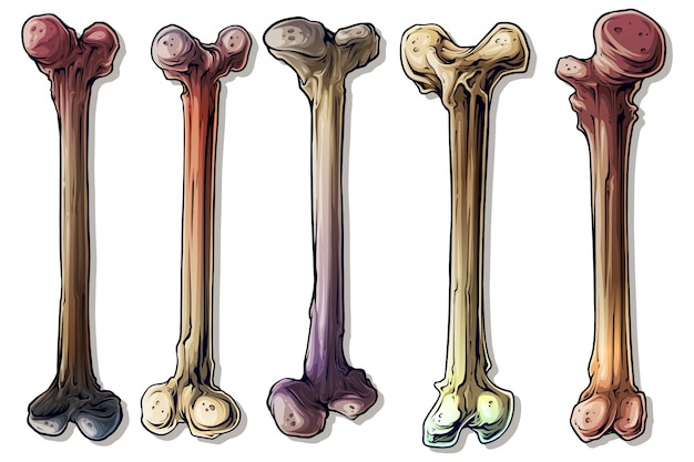 Szczegółowe graficzne kolorowe ludzkie kości zestaw