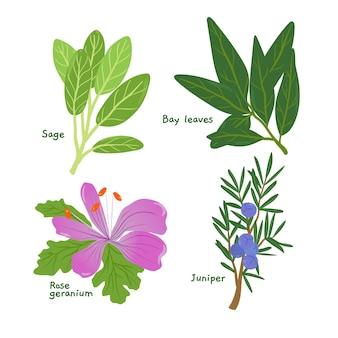 Szczegółowe zestaw ziołowych olejków eterycznych