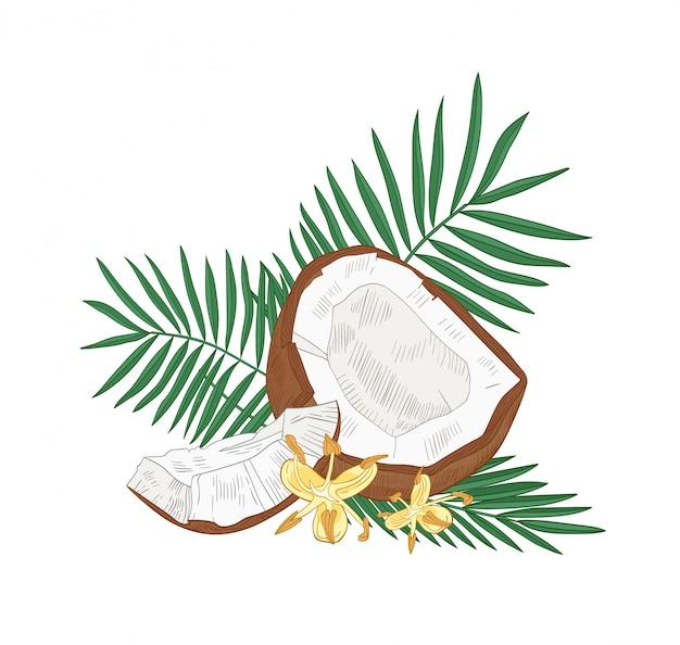 Szczegółowy rysunek botaniczny pęknięty kokos, liście palmy i kwiaty na białym tle. jadalne świeże egzotyczne owoce tropikalne lub pestkowiec. realistyczna ilustracja w stylu vintage.