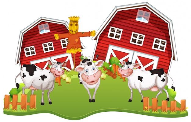 Szczęśliwe krowy w gospodarstwie