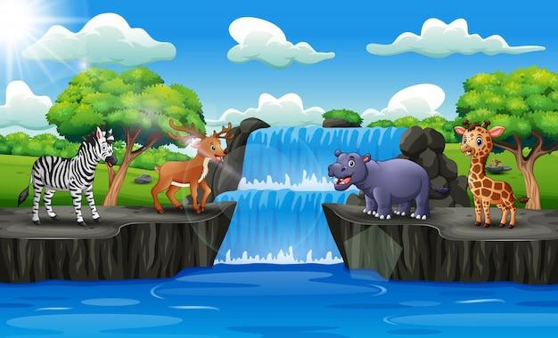 Szczęśliwe zwierzęta cieszące się wodospadem